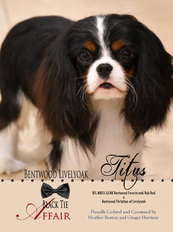 Picture Bentwood Livelyoak Black Tie Affair